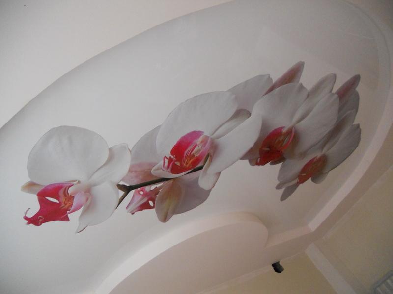 фотопечать на натяжном потолке цветы в Архангельске